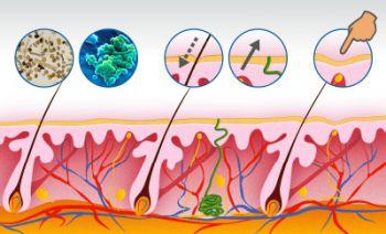 Aktive Funktionen der Haut